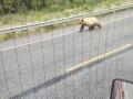 Grizzly Cub, Yukon Territory