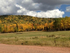 Colorado Aspen Fall Spectacular 2014