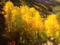 Beautiful Yellow Colorado Aspens