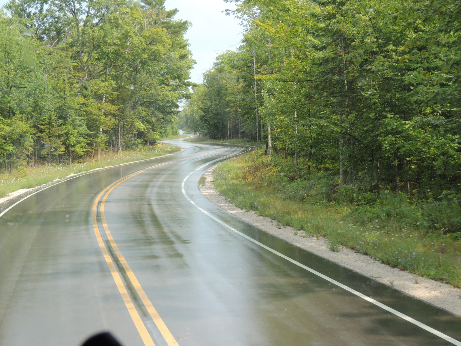 Road laid around trees