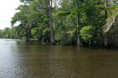 Beautiful Swamp Scenery