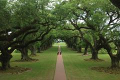 Oak Alley Plantation 4
