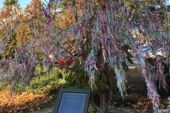 Cancer Survivor Tree