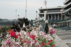 flowers in the winners circle